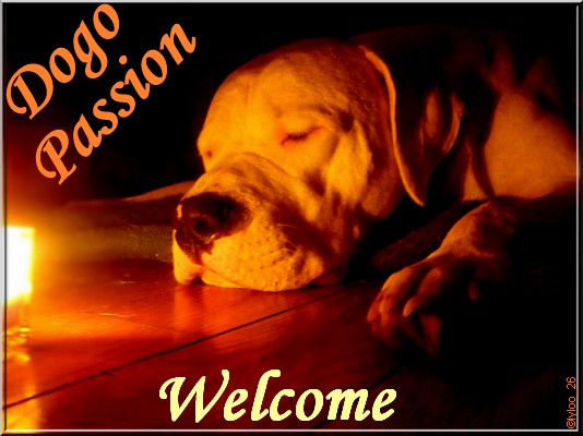 Dogo Passion
