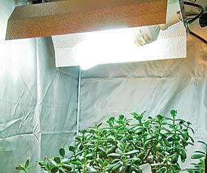 Lumi re pour les plantes d 39 int rieur for Lampe pour plante d interieur