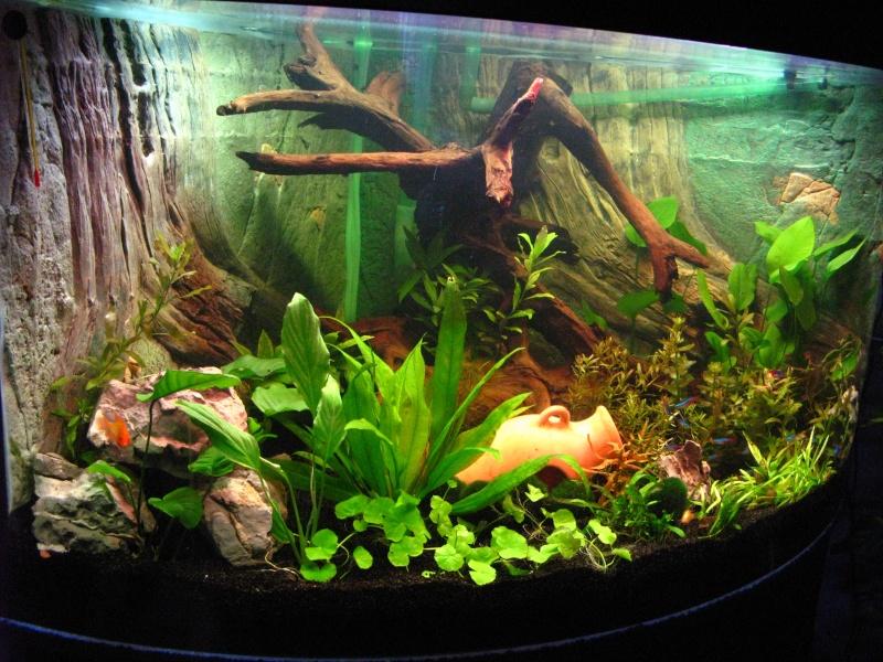 Presentation de mon nouveaux aquarium 350 litre for Aquarium 350 litres