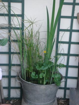 R aliser un demi tonneau pour plantes aquatiques - Bassin dans demi tonneau limoges ...