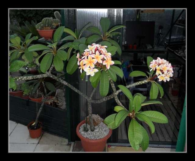 mes plantes succulentes page 8. Black Bedroom Furniture Sets. Home Design Ideas