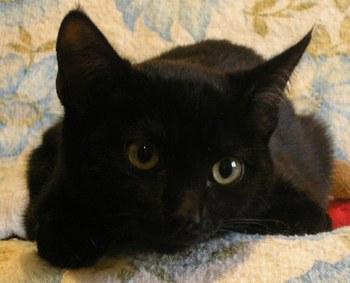 Le chat dans toute sa beaut - A quel age couper les griffes d un chaton ...
