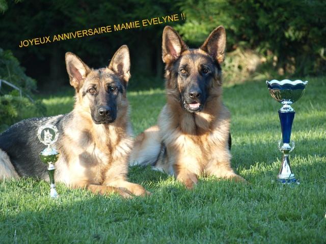 anniversaire chien berger allemand