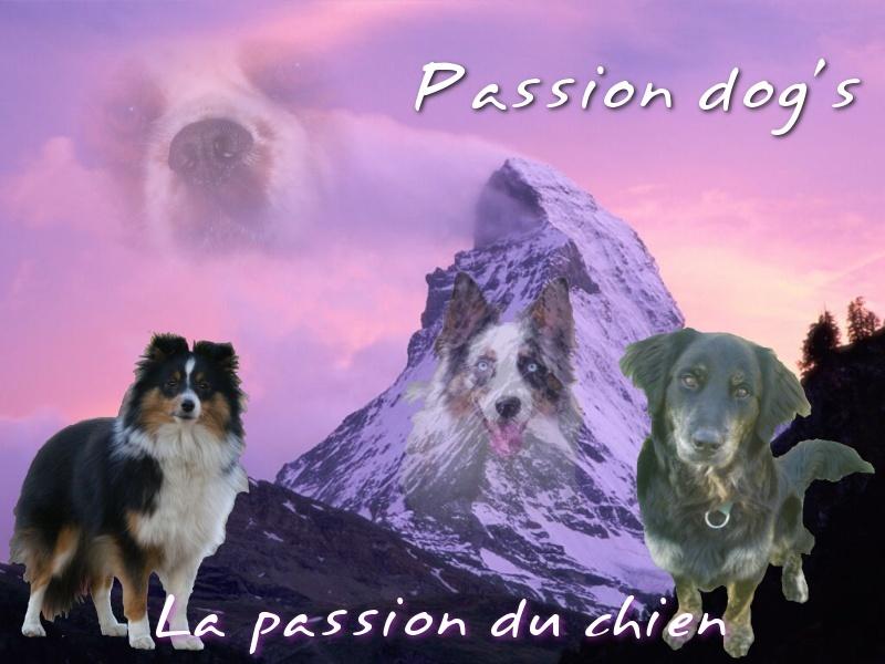 Passion dog's