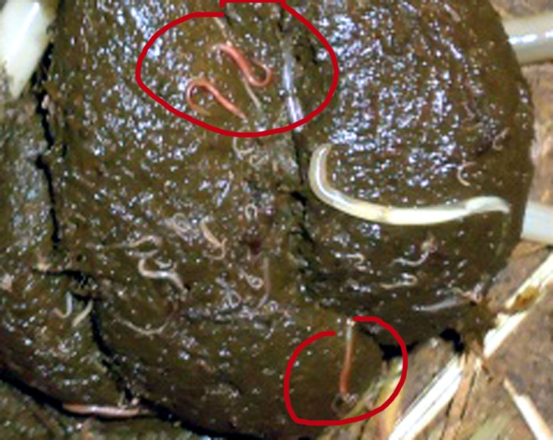 Les adaptations dans les organismes des parasites