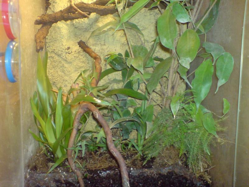 Achat Griffonia Simplicifolia - Troubles anxieux - Haute Autorité de Santé