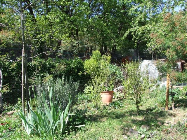 Mon jardin fleuri avant apres amenagement et en 8 ans de for Plantations jardin