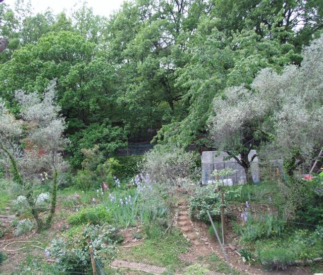 Mon jardin fleuri avant apres amenagement et en 8 ans de for Amenagement petit jardin fleuri