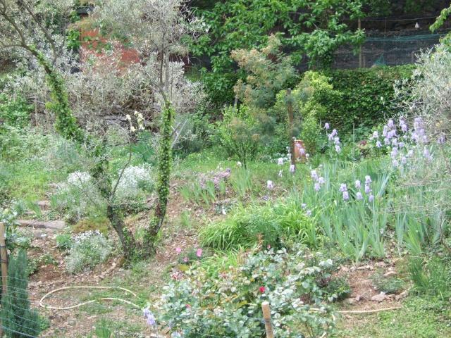 Mon jardin fleuri avant apres amenagement et en 8 ans de for Amenagement jardin fleuri