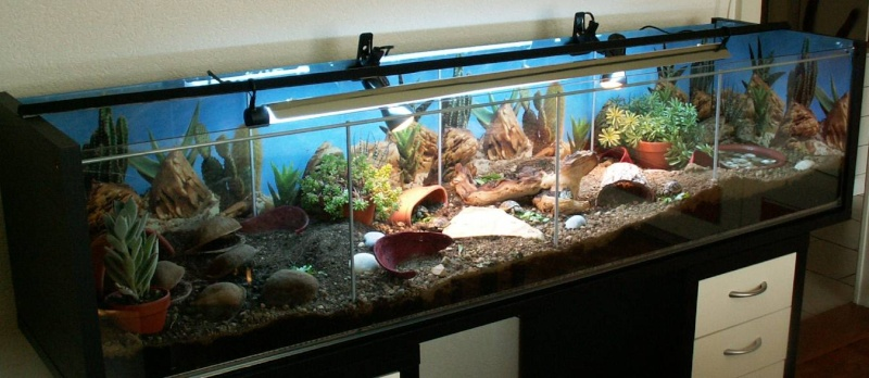 decoration terrarium tortue terre
