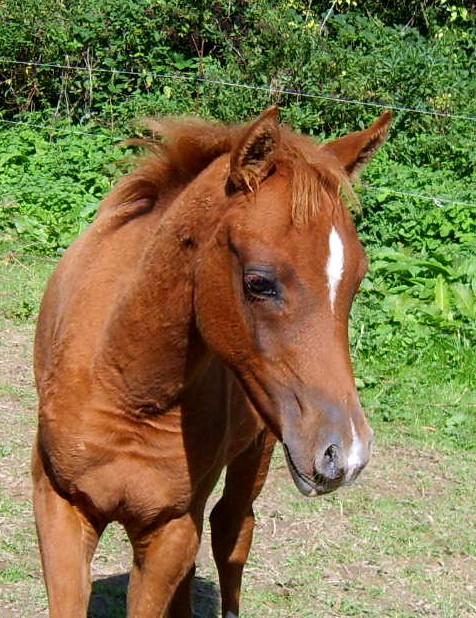 Chevaux coloriage gratuit chevaux a vendre avec jeux - Chevaux gratuits ...