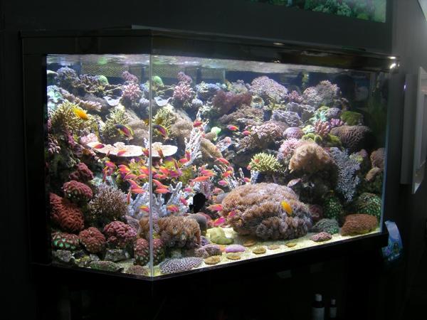 aquarium eau de mer vid o. Black Bedroom Furniture Sets. Home Design Ideas