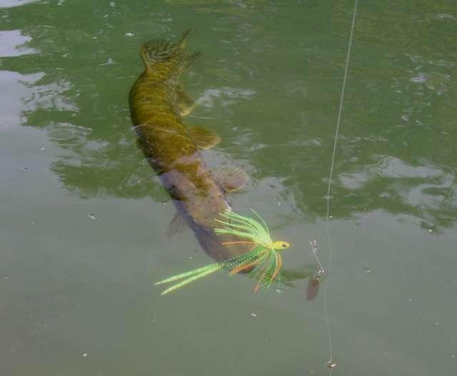 La pêche dans le domaine de Kalouga à kourakino le domaine de Kalouga