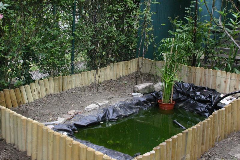 Plantes autour du bassin - Bassin pour tortue aquatique villeurbanne ...