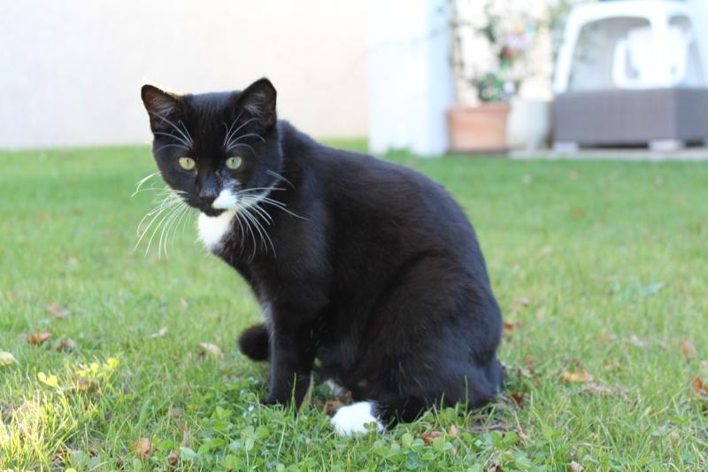 Bevorzugt Trouvé à Colomiers jeune chat noir et blanc EU63