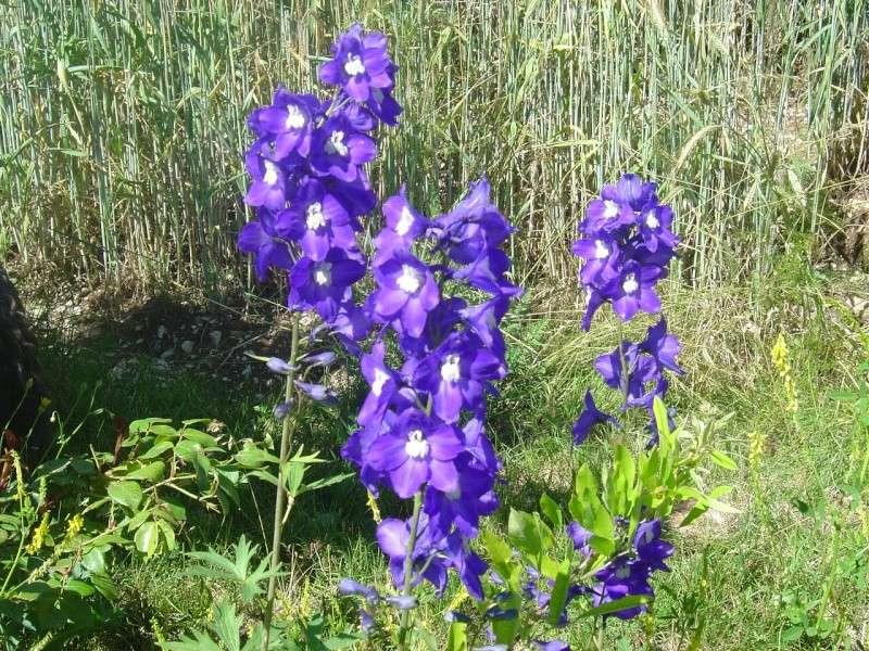 http://i48.servimg.com/u/f48/12/68/59/75/fleurs10.jpg
