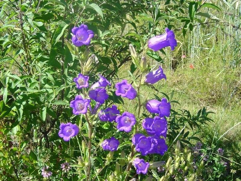 http://i48.servimg.com/u/f48/12/68/59/75/fleurs11.jpg