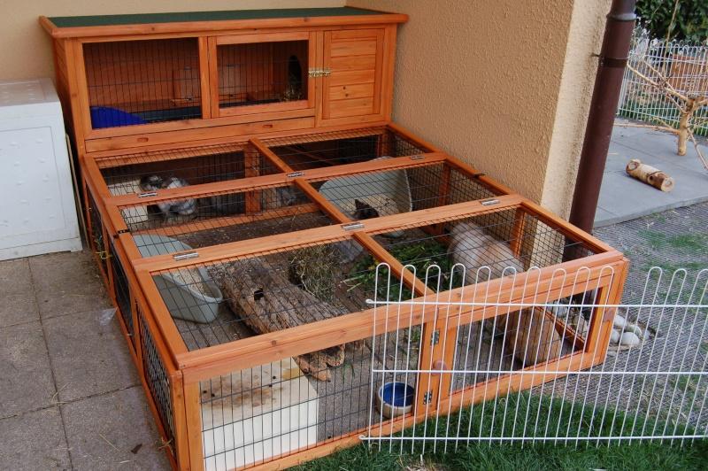 lapin am nagement de la cage. Black Bedroom Furniture Sets. Home Design Ideas