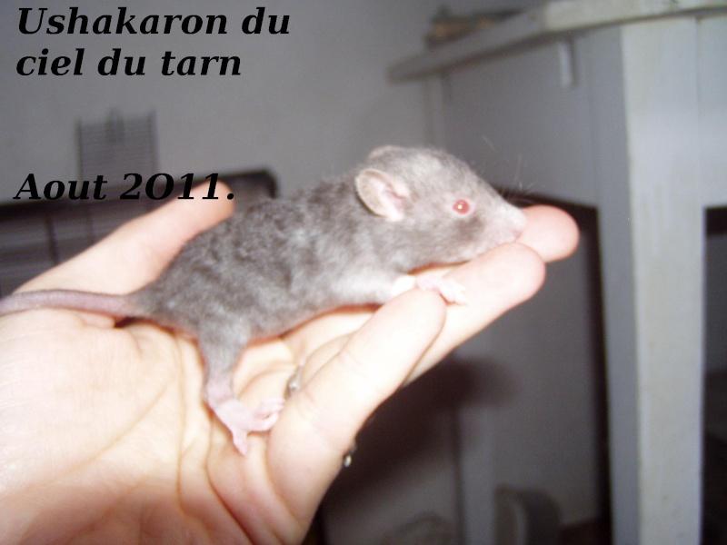 rats_413.jpg