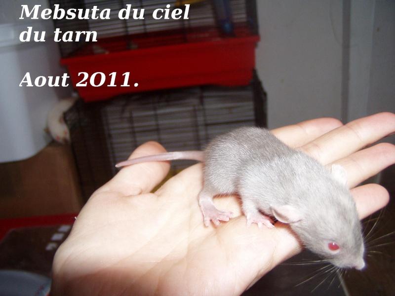 rats_414.jpg