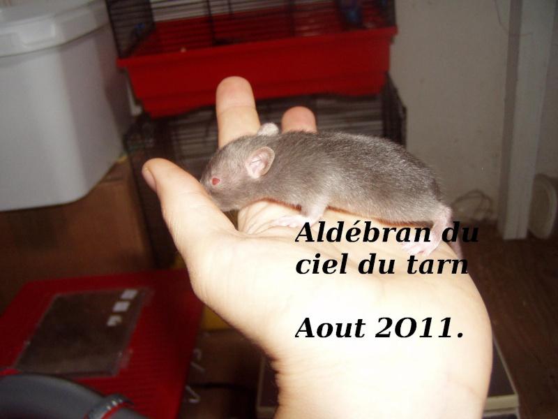 rats_415.jpg