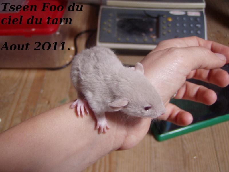 rats_417.jpg