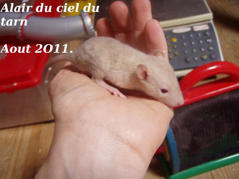 rats_418.jpg