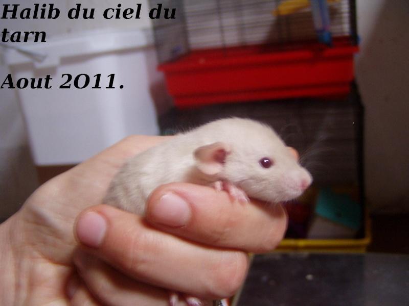rats_419.jpg