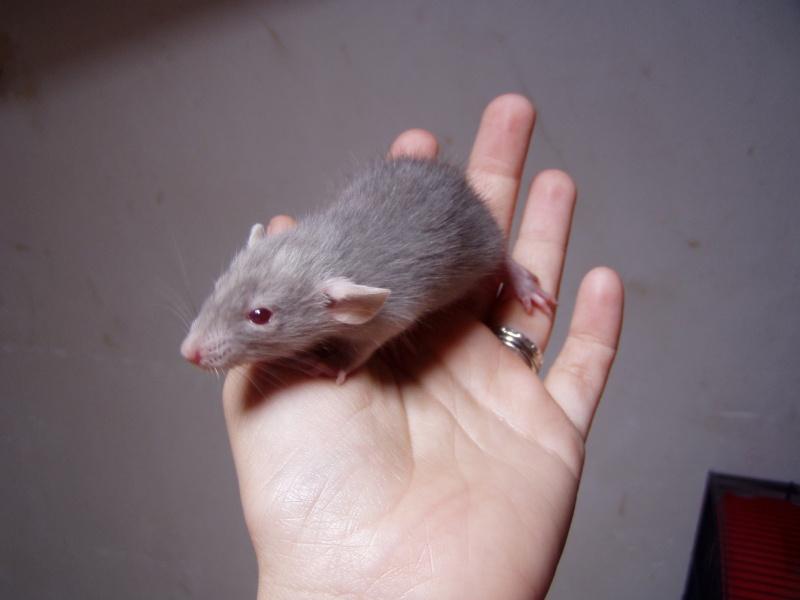 rats_513.jpg