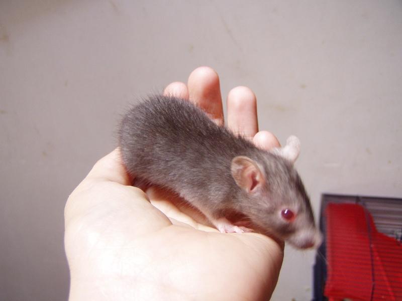 rats_518.jpg