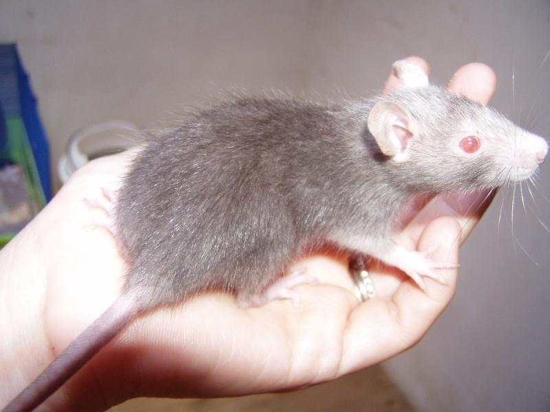 rats_523.jpg