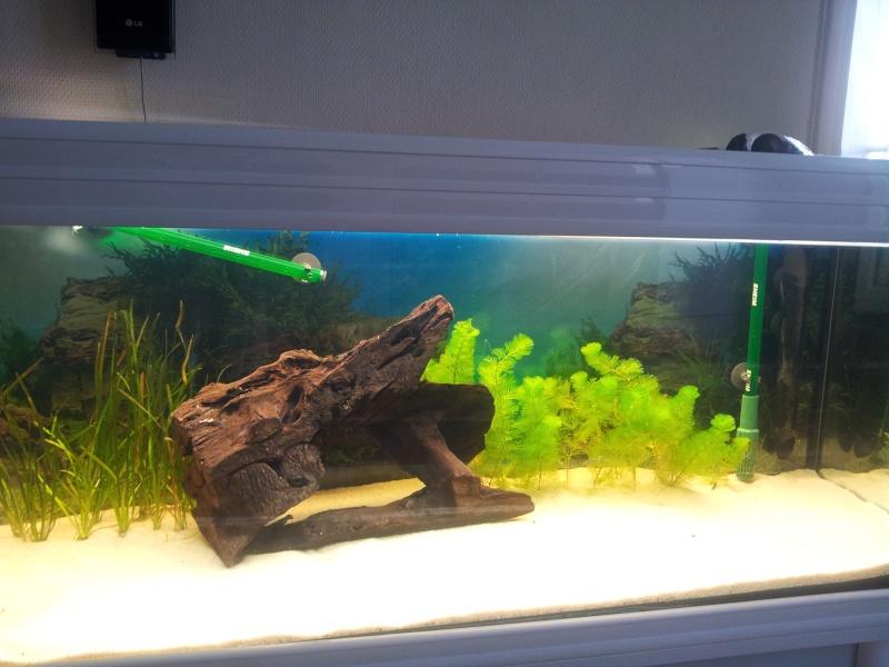 Aquarium 200 litres amazonien for Aquarium 200 litres