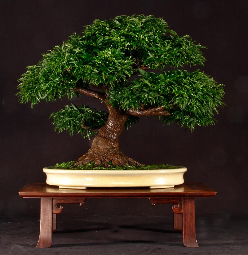 At One Time, Before Our House BBQ, This Bonsai Display Table Was The Most  Expensive Piece Of Furniture In Our Home. Itu0027s Handmade Indian Rosewood  With All ...