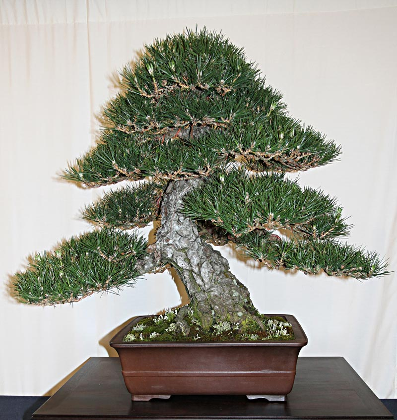 official 3rd us national bonsai exhibition results