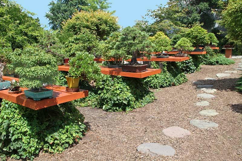 Backyard Bonsai Garden : NEW BONSAI GARDEN TABLES