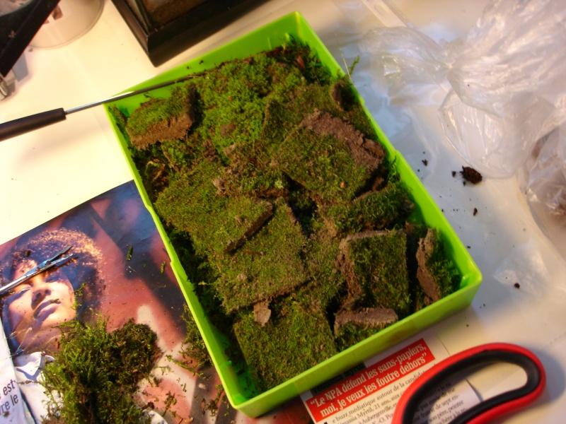 mousse pour terrarium tropical