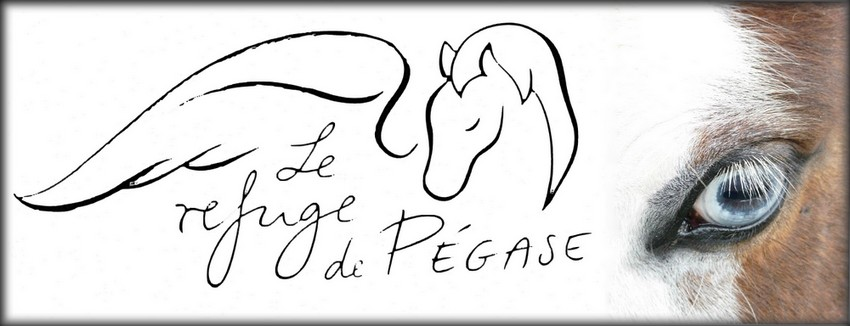 Association Sauvetage Chevaux Picardie - Le Refuge de Pégase