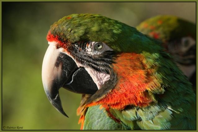 perroquets perruches et élevage