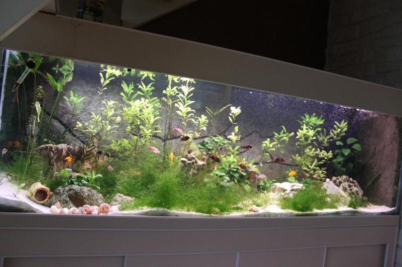 new aquarium de 532 litres