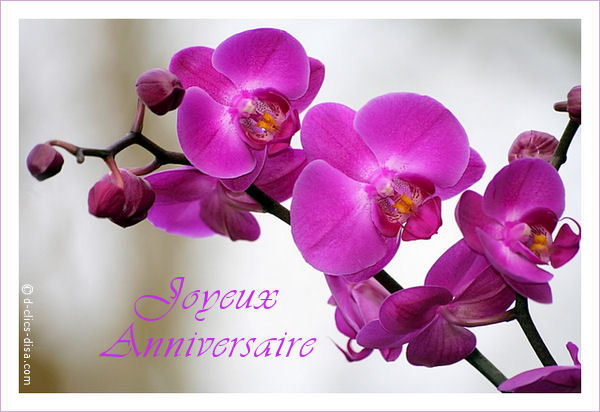 Orchidee Anniversaire
