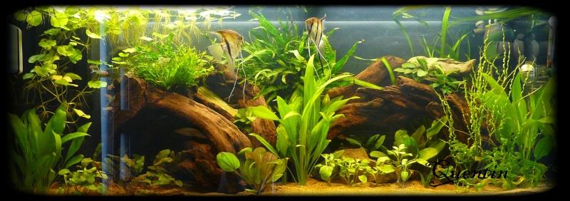 250 l amazonien repro scalaire for Exemple de decoration aquarium