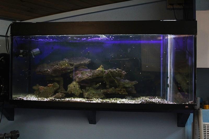 vends batterie aquarium recif auvergne fr