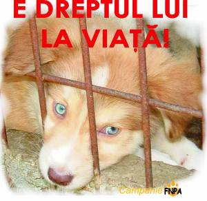 Forum Protectia Animalelor