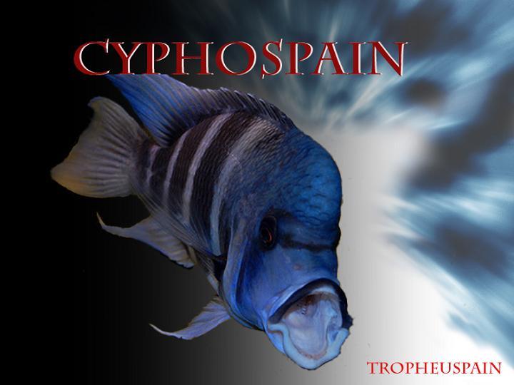 Cyphotilapia
