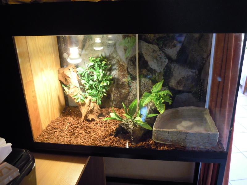 Petit soucis avec mes panth rophis guttatus elaphe - Petit terrarium ...