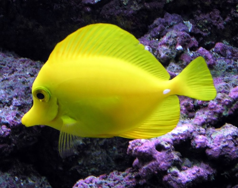 yellow10.jpg