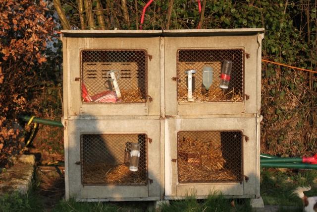 Clapiers lapins en beton - Clapier lapin beton ...