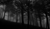 Une forêt sombre...