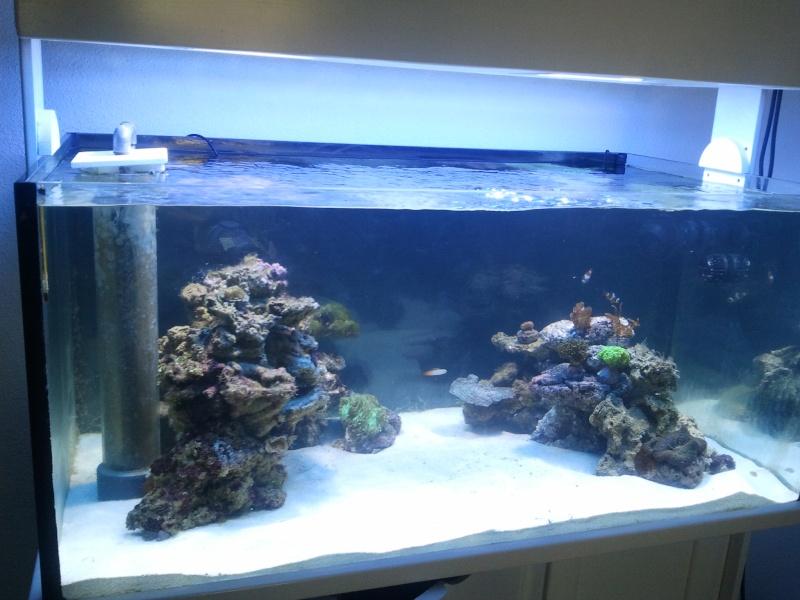 aquarium recifal 540l eauturquoise mon projet mon bac et moi cap r cifal. Black Bedroom Furniture Sets. Home Design Ideas