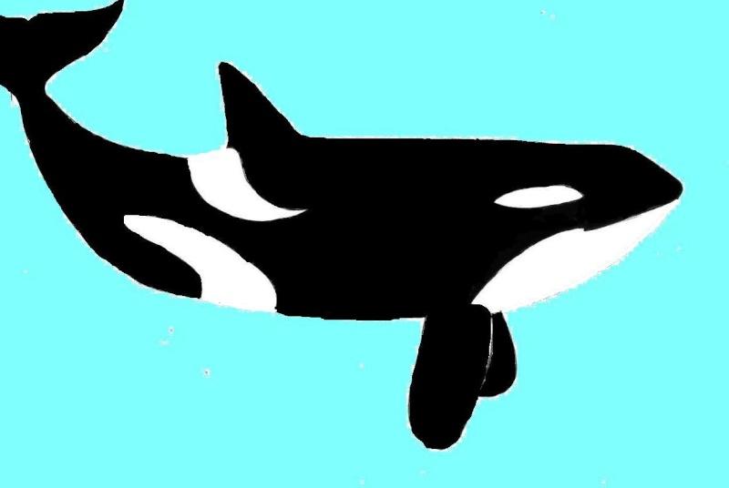 Dessine moi une orque je te dirais qui tu es - Dessin d orque ...